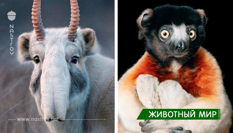 Берущие за душу портреты вымирающих животных, которых вы рискуете больше никогда не увидеть!