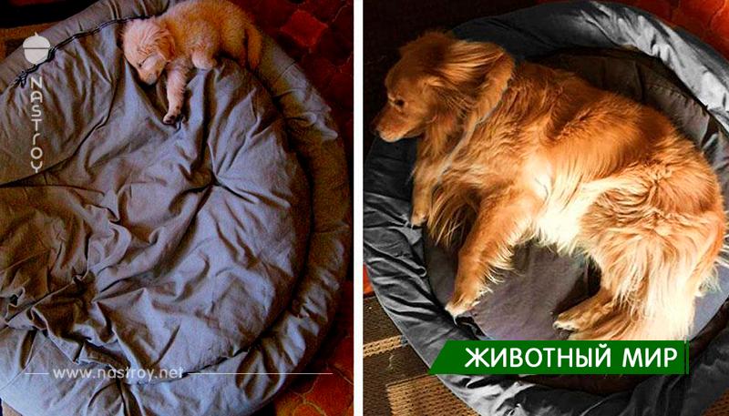 22 фотографии собак до и после того, как они выросли!