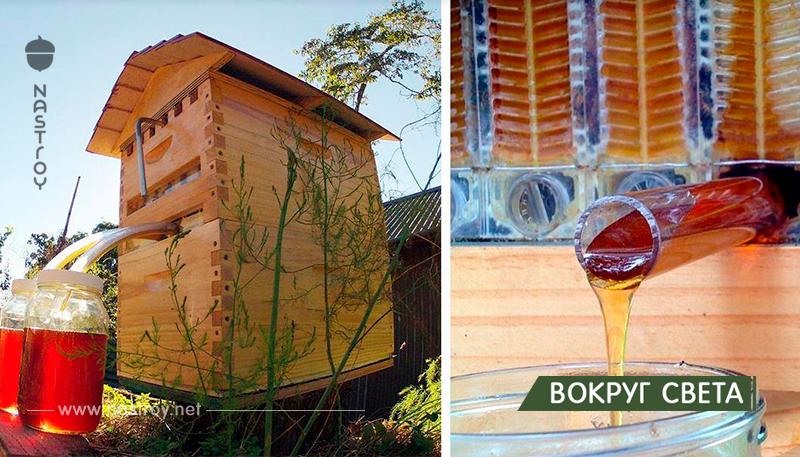 Новые ульи автоматически собирают мёд, чтобы не тревожить пчёл!