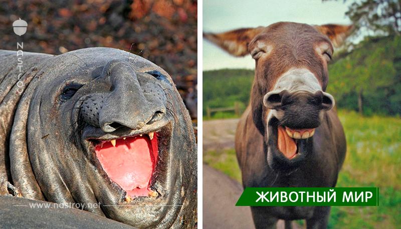 30 самых очаровательных животных, которые с легкостью заставят вас улыбнуться!