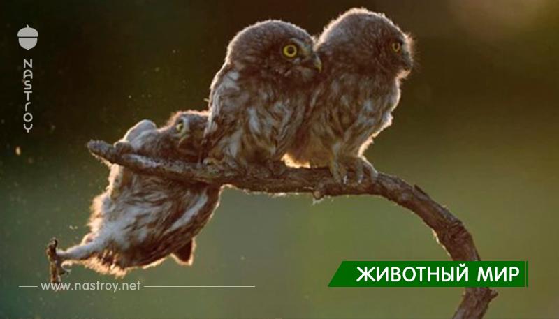 ПОТРЯСАЮЩИЕ ФИНАЛИСТЫ КОМЕДИЙНОЙ ФОТОГРАФИИ ДИКОЙ ПРИРОДЫ 2017!