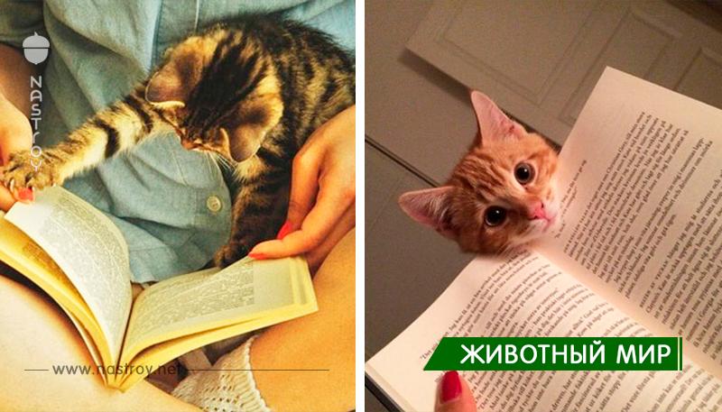 20+ Кошек, Которые Нуждаются В Вашем Внимании в Тот Момент, Когда Вы Начинаете Чтение!