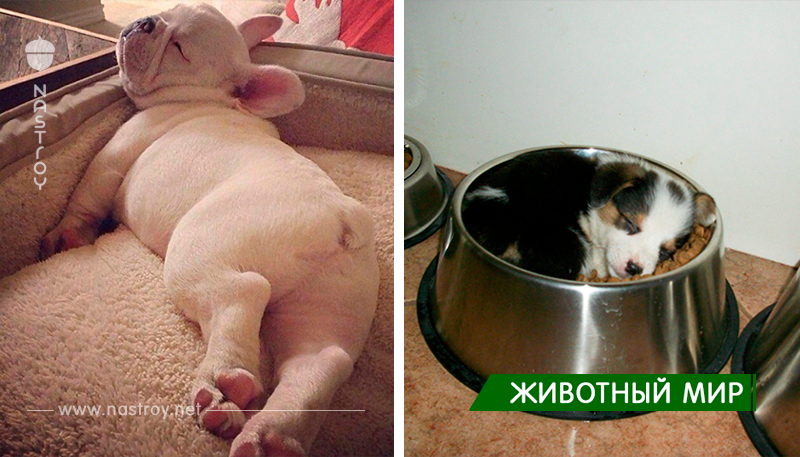 22 щенка, которые могут спать в любом месте и в любое время