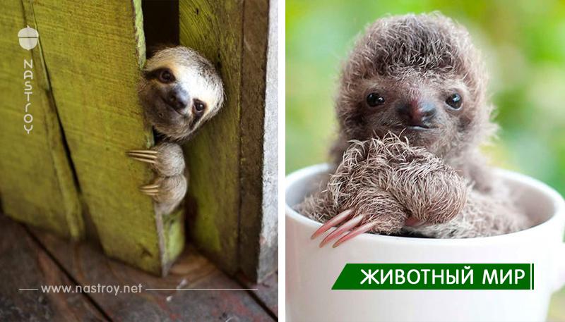 15 +  симпатичных ленивцев, отмечающих международный день лени.
