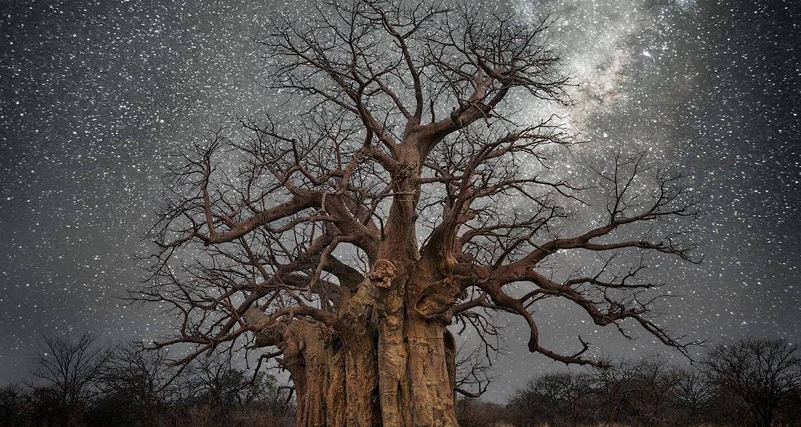 Завораживающие фотографий самых старых деревьев под звёздным небом!