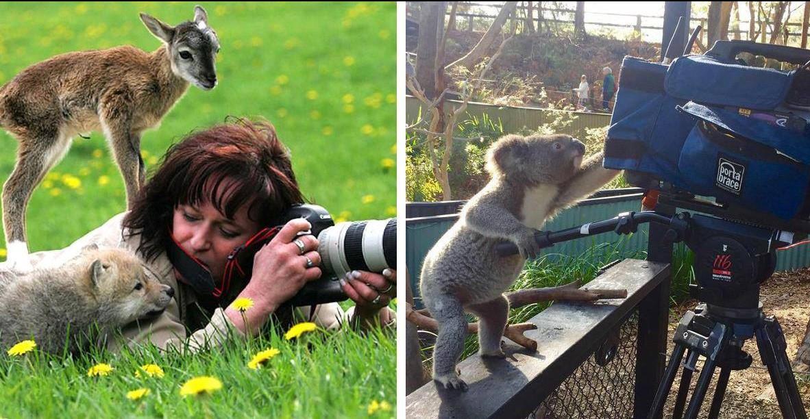 20 животных, которые хотят стать фотографами!