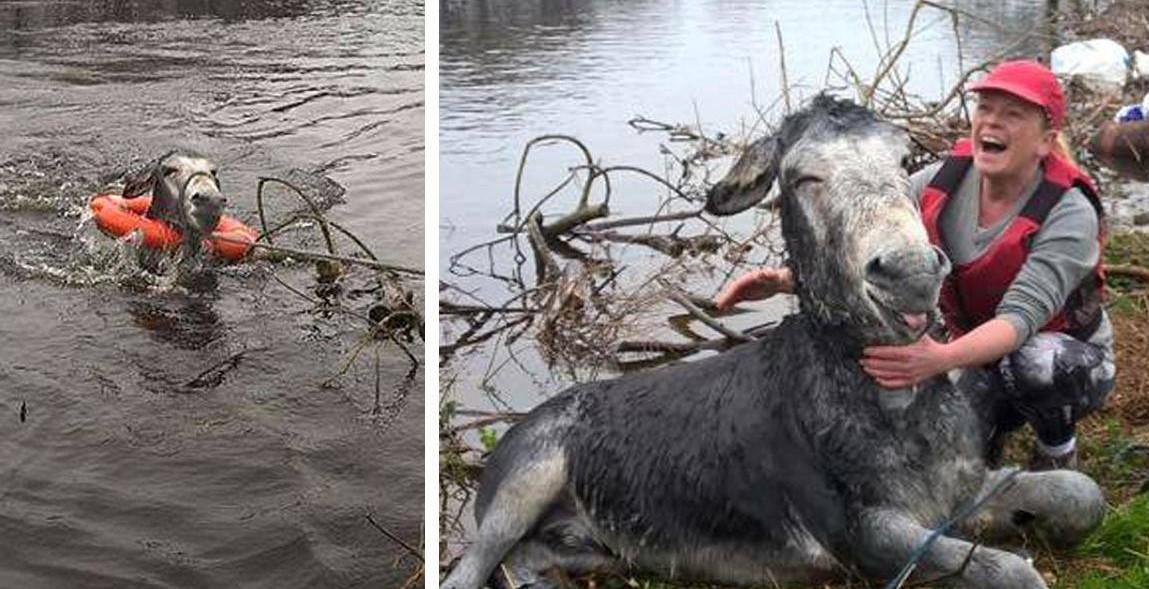 Осел улыбается от уха до уха после спасения от потопа в Ирландии