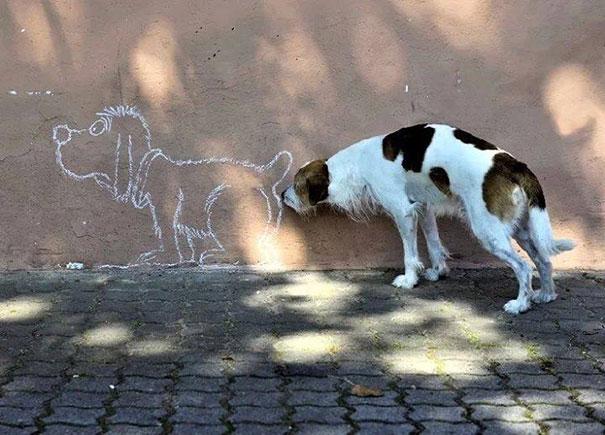 Фото собак, сделанных в самый подходящий момент!