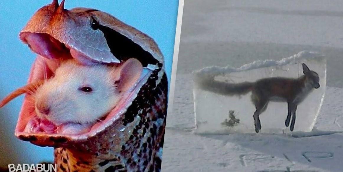 Подборка ужасных фотографий природы, которые точно вас шокируют!