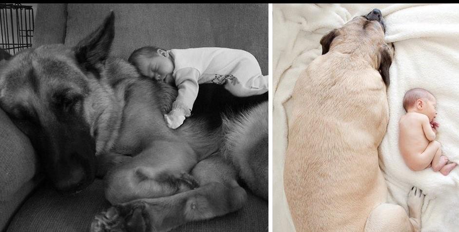 22+ большие собаки, которые заботятся о маленьких детях!