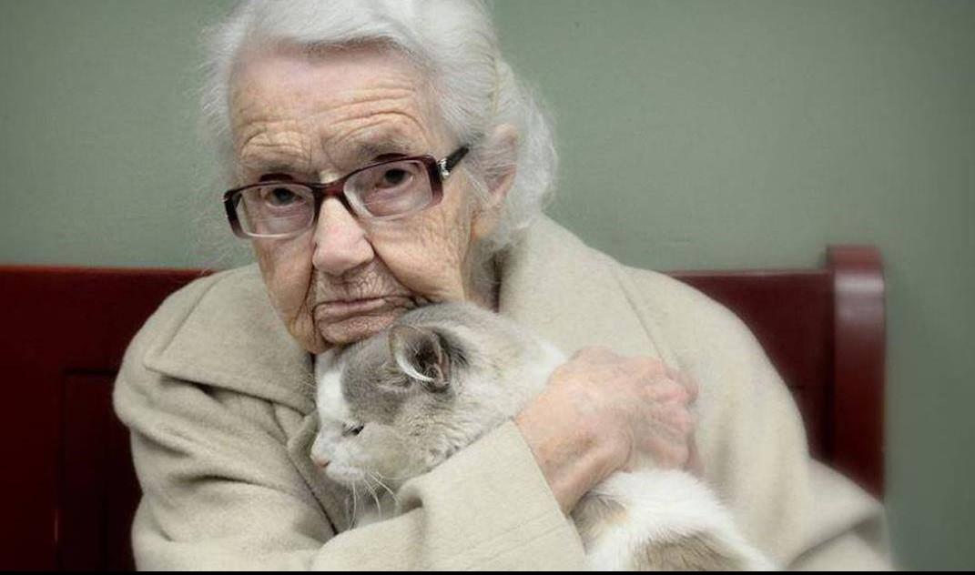 20 старых кошек, которых приютили люди с большим сердцем!