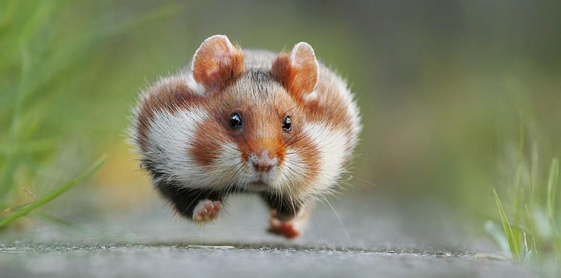 13 самых смешных фотографий животных 2015 года!
