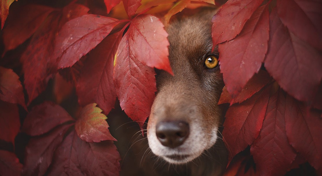 15 душевных портретов собак, наслаждающихся осенью!