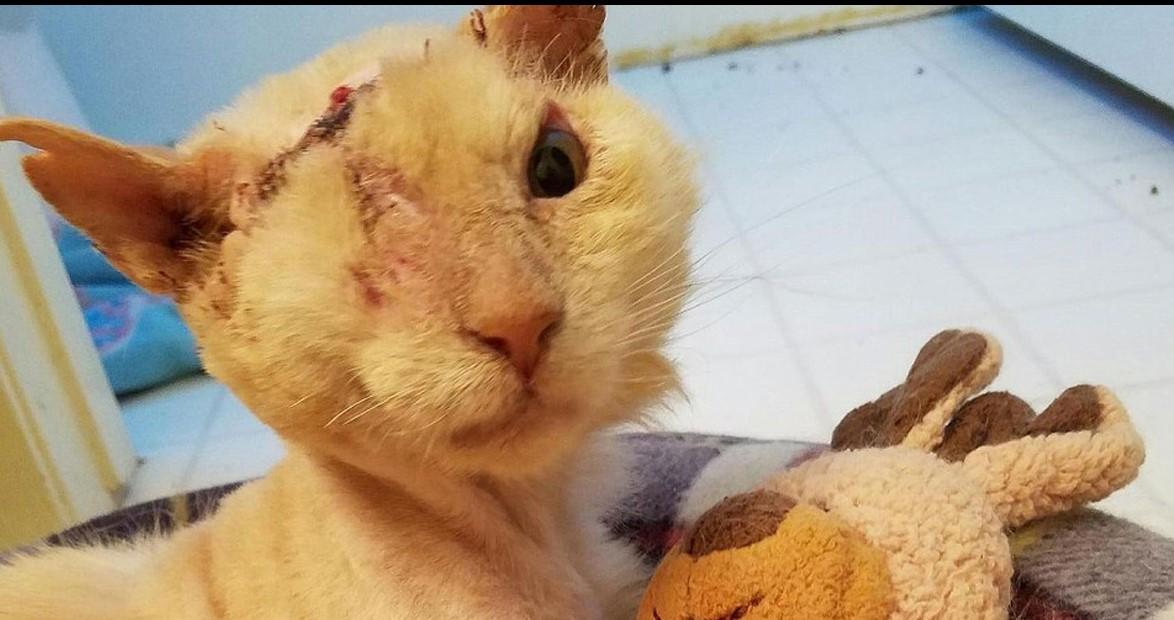 Неизвестные вылили кислоту на морду этого кота, но он все равно любит и доверяет людям!