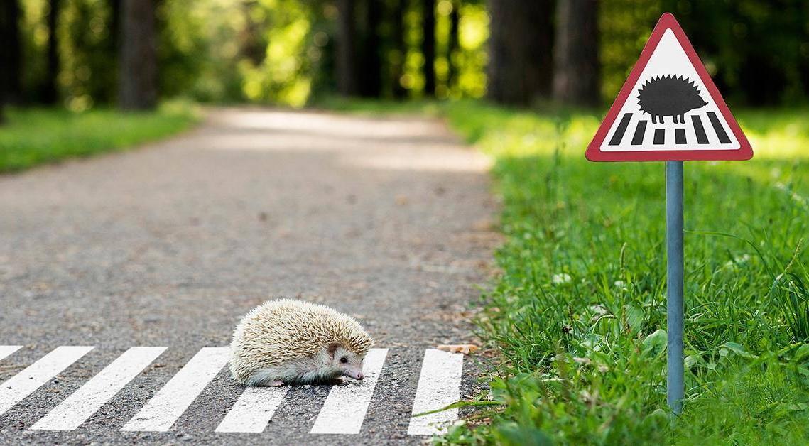 В Вильнюсе установили крошечные дорожные знаки для самых маленьких жителей города!