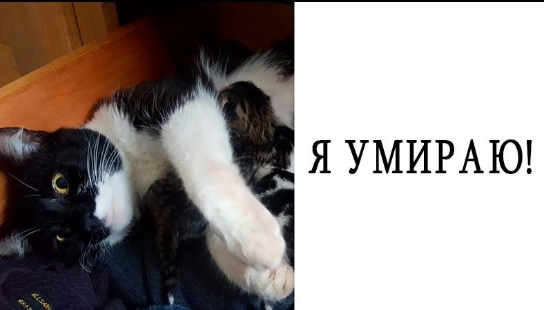 Парень пошёл в комнату, чтобы взять свитер, а нашёл кошку с новорождёнными котятами. Но у него нет животных!