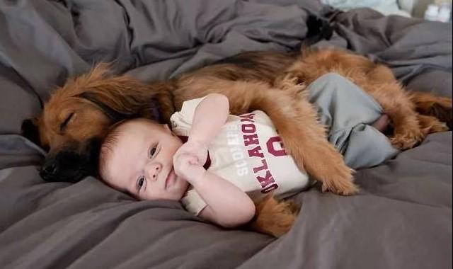 20 примеров безусловной любви собак, которые растопят ваше сердце!