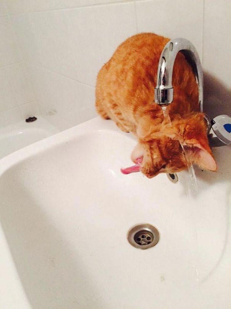 25 котов идиотов, которые заставят вас громко смеяться!