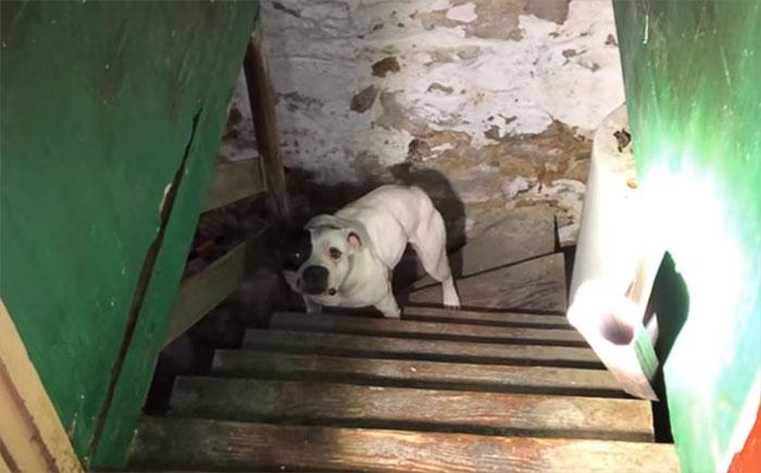 Мужчина переехал в новый дом и нашёл в подвале брошенную собаку, и вот её реакция