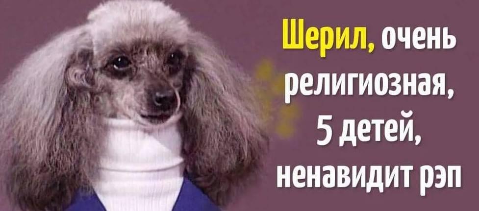 10 уморительных мемов с собаками, которые напомнят вам кое-кого из ваших знакомых!