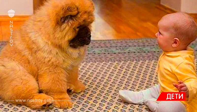 У малыша была парализована одна сторона тела, и тогда врач посоветовал семье купить определённую собаку. Все были удивлены её действия!