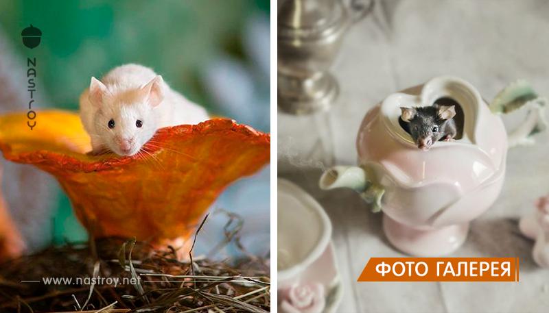 Животные, спасённые из лабораторий, поучаствовали в волшебной фотосессии в стиле «Алисы в стране чудес»
