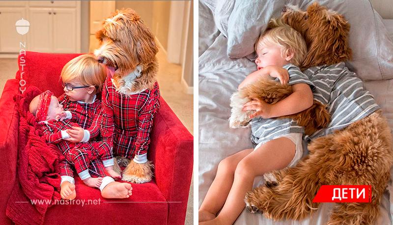 Душевная дружба между мальчиком и его собакой!