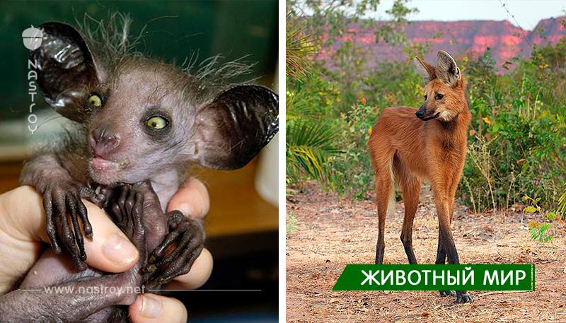 22 Странные животные, о которых вы, вероятно, не знали!