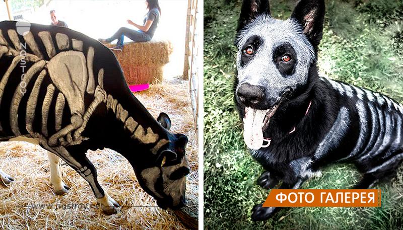 Животные, которые тоже принимают участие в Хэллоуине!