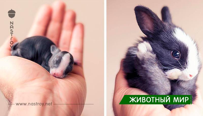 Когда фотомодели - кролики!