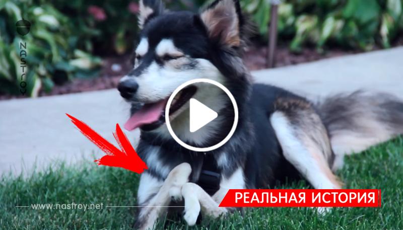Пес с врожденным дефектом передних лап получил возможность бегать благодаря 3D печати!