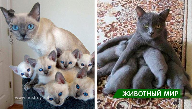 20 гордых кошек с их очаровательными детками!