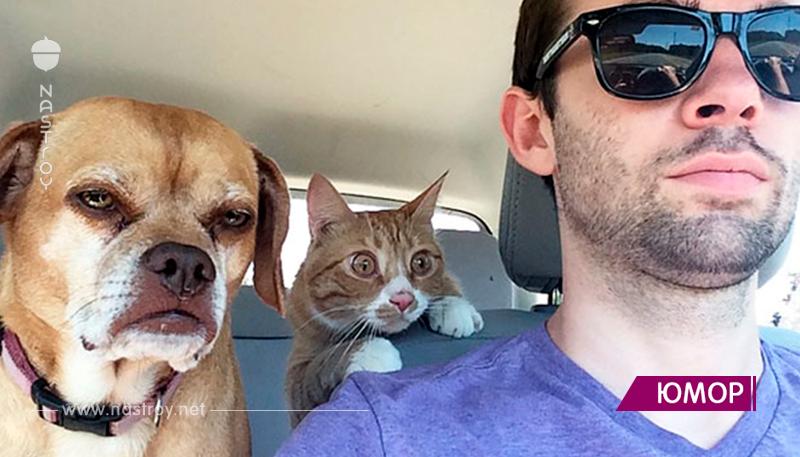 20 смешных моментов, когда собаки осознали, что они едут к ветеринару вместо прогулки!