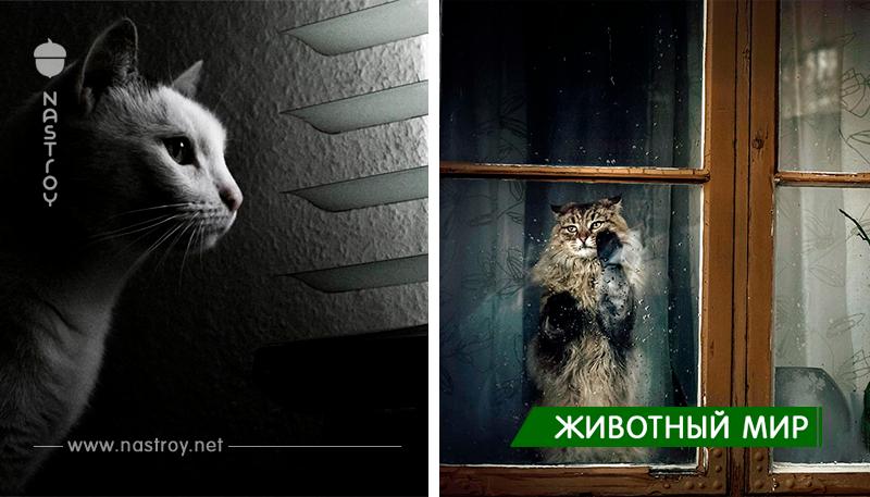 30 меланхоличных котиков: «Хозяин, ну где же ты?»