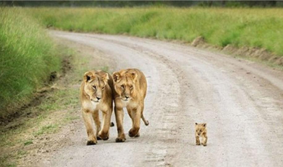 18 + фото животных с детьми, которые растопят даже самое чёрствое сердце!