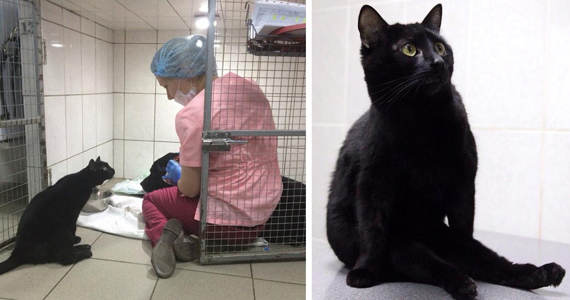 Спасенный кот, который не может ходить, становится медбратом, помогает больным животным и даже спасает им жизнь!