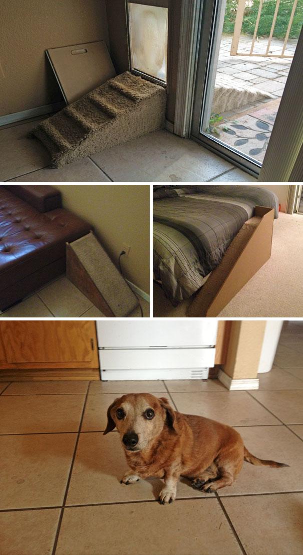 15 креативных владельцев собак, которые сделали милые вещи для своих питомцев