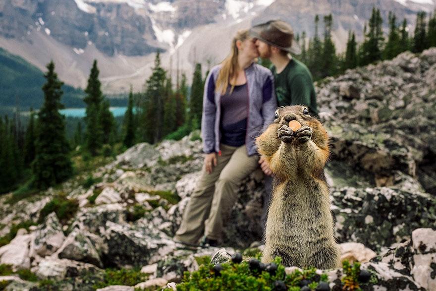 Белка фотобомбит фотосессию помолвки самым очаровательным образом