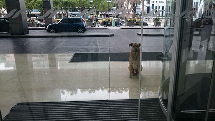 Стюардесса приютила бездомного пса, который не переставал ждать ее у дверей отеля