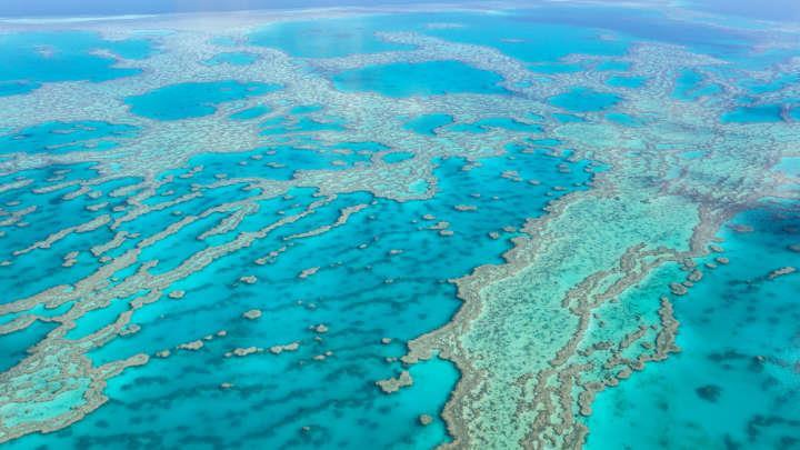 Ученые уверены, что Большой Барьерный риф уже не спасти!