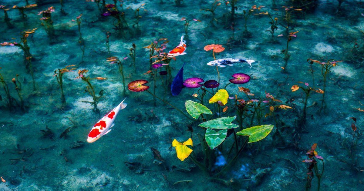 Фотограф снял Японию в сезон дождей, и некоторые фото похожи на картины!