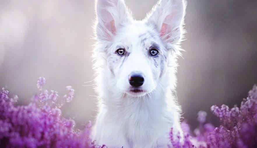 Польский фотограф снимает самые прекрасные портреты собак!
