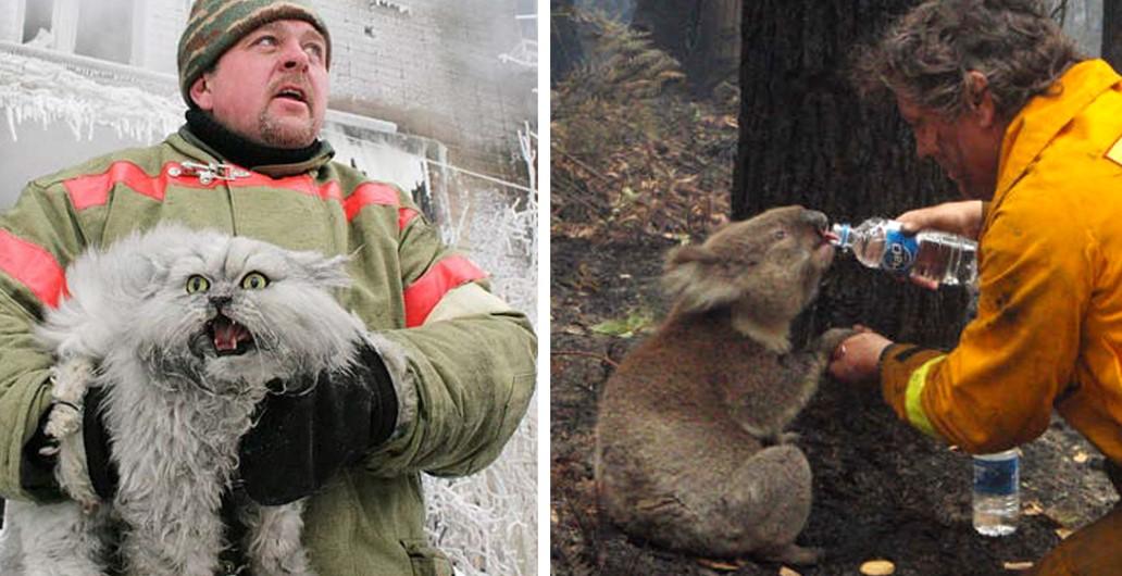 15 пожарных, которые рисковали своей жизнью, чтобы спасти животных!
