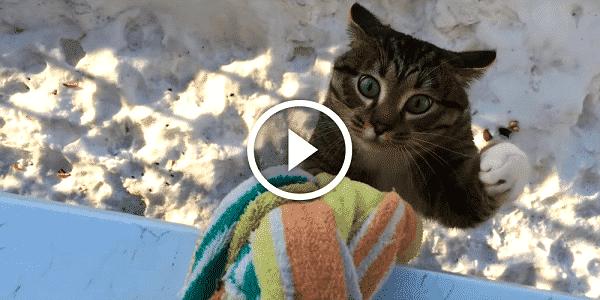 Когда этот кот возвращается домой, соседи падают со смеху!
