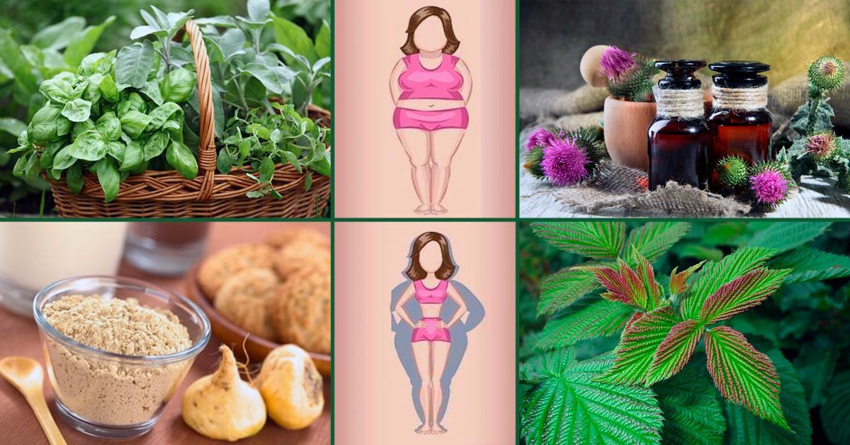 Гормональный Баланс И Похудение. Как похудеть без диет? Наладить гормональный фон