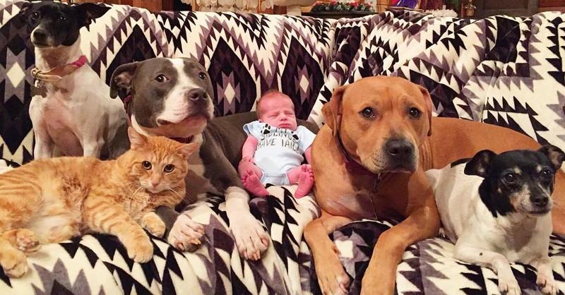Дружба между ребенком собаками, и котом!