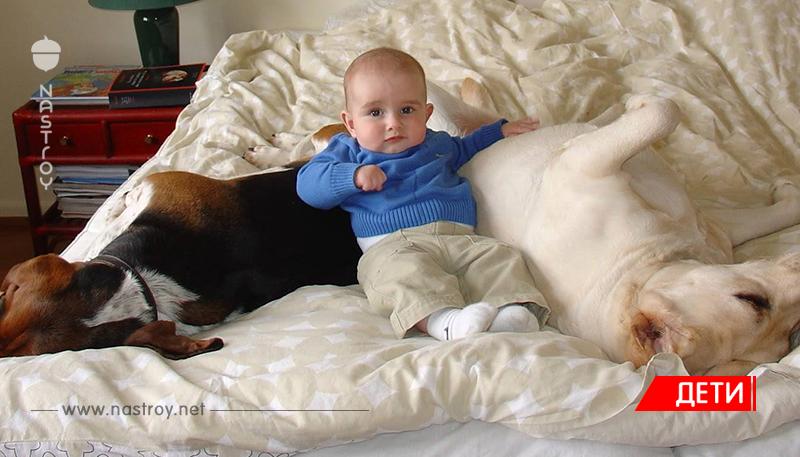 Увидев эти фотографии, вы поймете, что вашим детям просто необходима собачка. А если нет - вы, должно быть, КОТ!