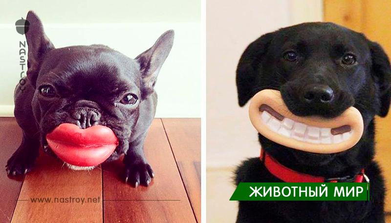 20 собак, которые не подозревают о том, насколько глупо выглядят со своими игрушками!