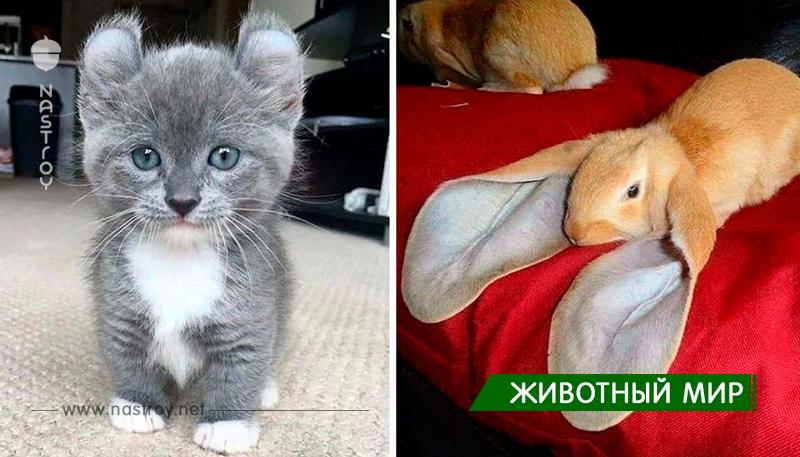Животные у которых необычная внешность!