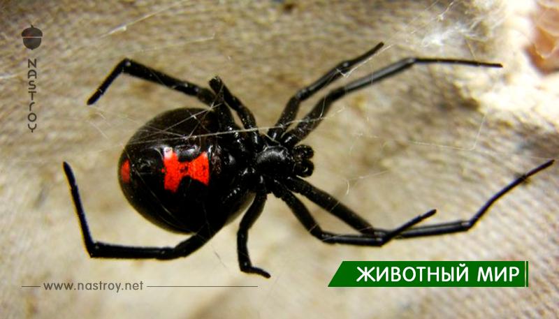 Почему мы боимся пауков?